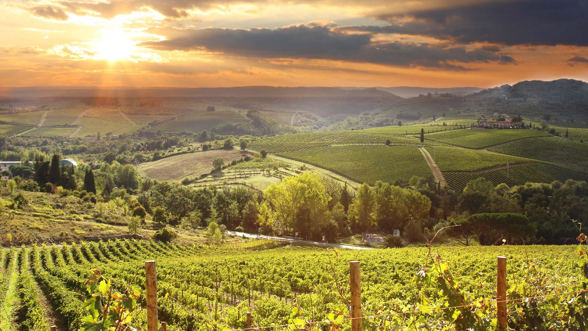 Vinrejse til Alsace og Toscana med Historiske Rejser og Løves Vinrejser